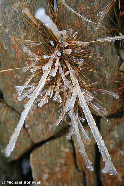 Alpine Grasses, Mt Feathertop, Victoria, Australia