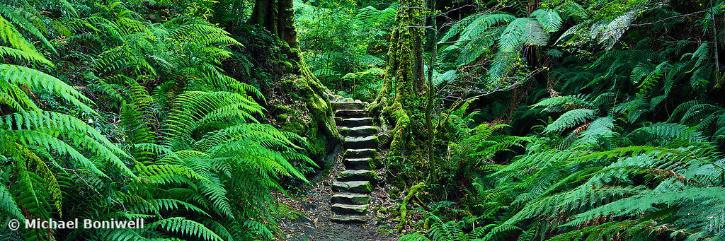Grand Canyon Track, Blue Mountains, New South Wales, Australia