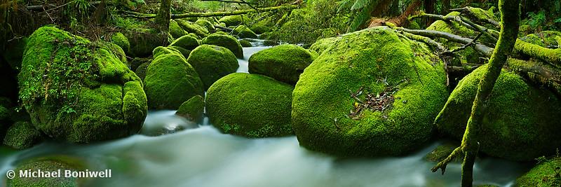 Greenery, Toorongo River, Gippsland, Victoria, Australia