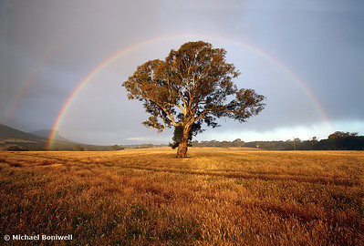 After the Rain, Grampians, Dunkeld, Victoria, Australia