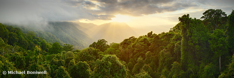 Tree Top Dawn, Dorrigo National Park, New South Wales, Australia