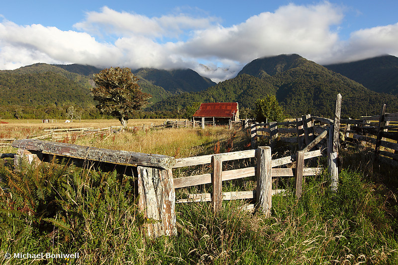 Farm Yard, West Coast, South Island, New Zealand