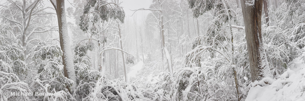 Snowy Trees, Alpine National Park, Victoria, Australia