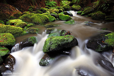 Verdant Stream, Otways, Great Ocean Road, Victoria, Australia