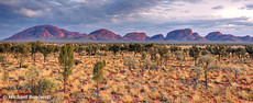 The Olgas (Kata Tjuta), Dawn, Northern Territory, Australia