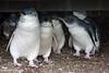 Wildlife : Australian Birds & Animals