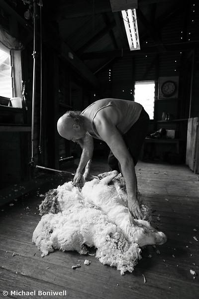 Dean Kriewalde, Shearer, Tooborac, Victoria, Australia