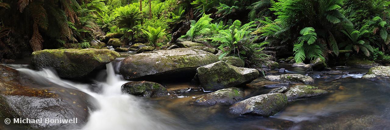 Youngs Creek, Otways, Great Ocean Road, Victoria, Australia