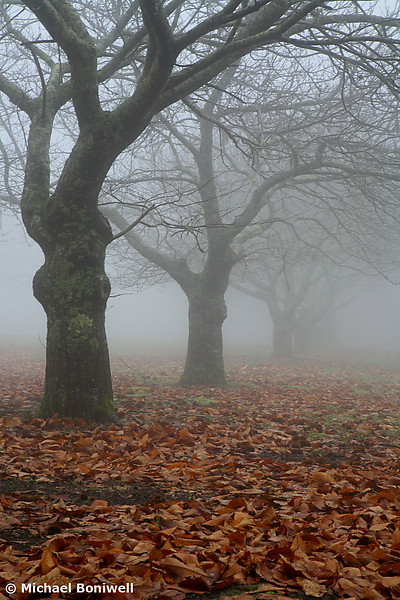Forgotten Orchard, Yarra Ranges, Victoria, Australia