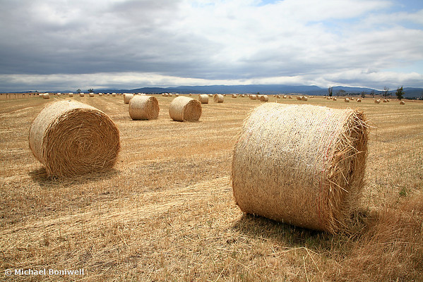 Hay Bales, North East Tasmania, Australia