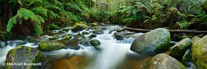 Toorongo River, Gippsland, Victoria, Australia