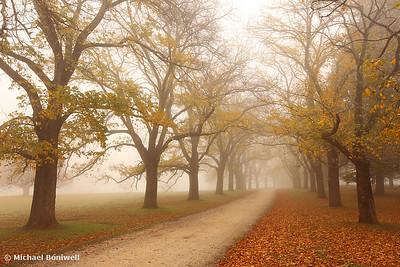 Autumn Fog, Daylesford, Victoria, Australia
