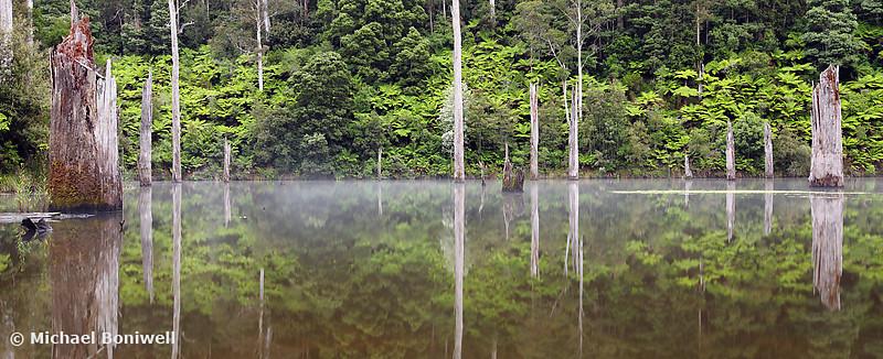 Lake Elisabeth, Otways, Great Ocean Road, Victoria, Australia