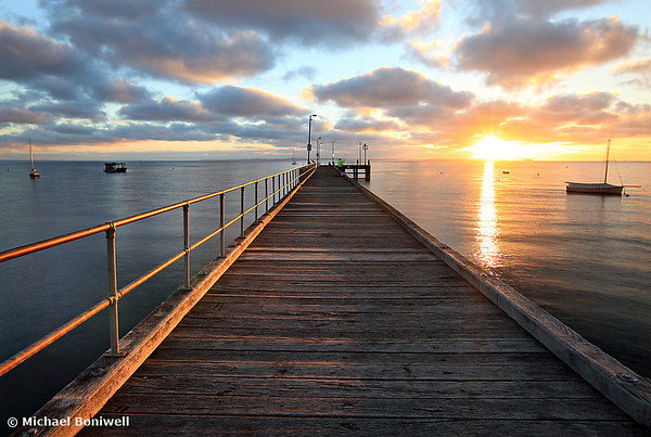 Morning Glory, Mornington Peninsula, Victoria, Australia