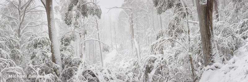 Snowy Trees, Alpine National Park, Victoria, Australia