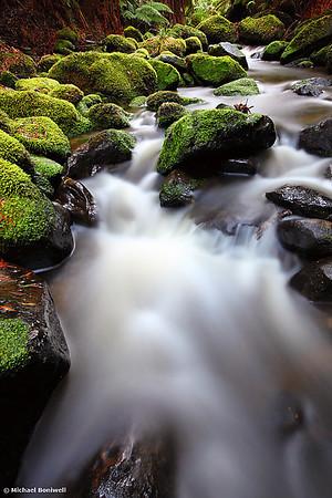 Verdant Stream, Otways, Great Ocean Road, Victoria, Australia