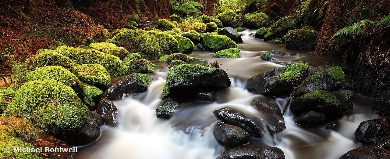 Verdant Stream Sleeps, Otways, Great Ocean Road, Victoria, Australia