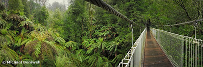 Tarra Bulga Suspension Bridge, Victoria, Australia