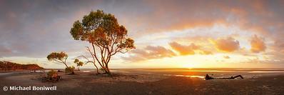 Mangrove Trees, Moreton Bay, Queesnland, Australia