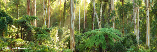 Dawn Lights The Dandenongs, Victoria, Australia
