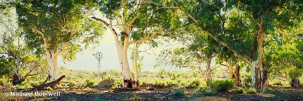 River Gums, Flinders Ranges, South Australia