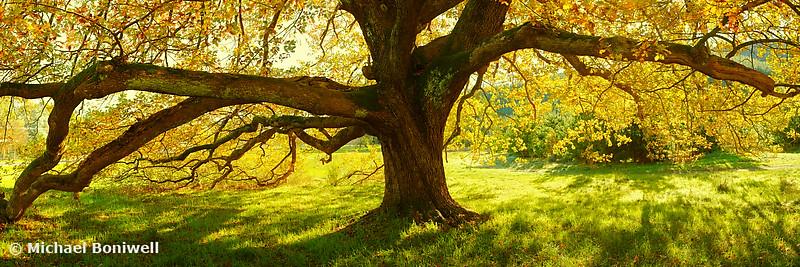 Autumn Colours of Myrtleford, Victoria, Australia