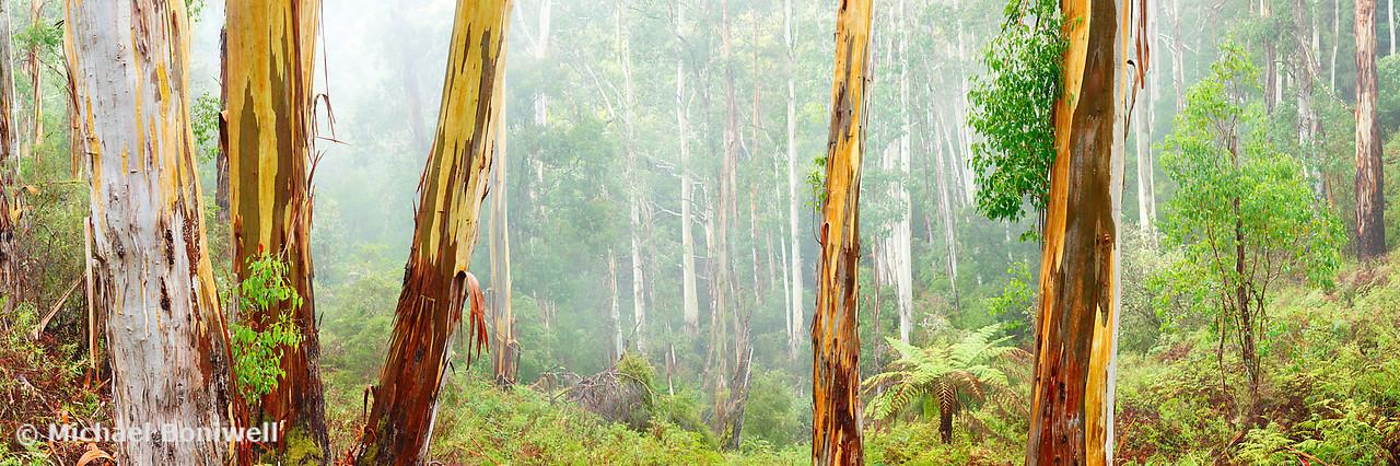 Foggy Forest, Otways National Park, Victoria, Australia