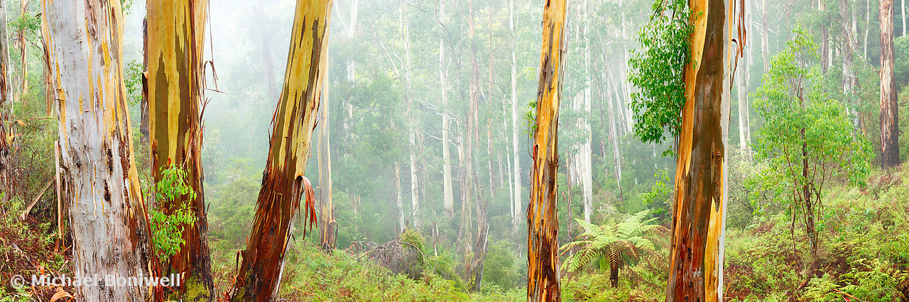 Foggy Forest, Otways National Park, Victoria, Australia