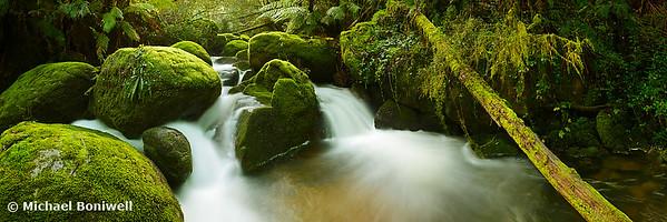 Dawn Moss, Toorongo River, Gippsland, Victoria, Australia
