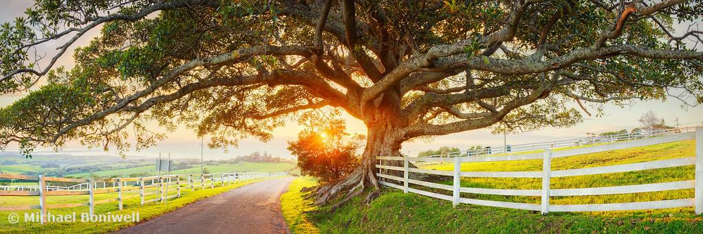 Road to Kiama, New South Wales, Australia