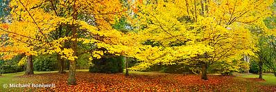 Mt Wilson Gardens, Blue Mountains, New South Wales, Australia