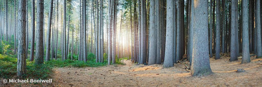 Sugar Pines, Laurel Hill, New South Wales, Australia
