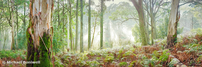 Woodland Morning, Mt Macedon, Victoria, Australia